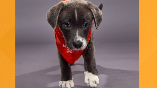 Puppy Bowl 2020: Meet the adorable pups in the starting ...
