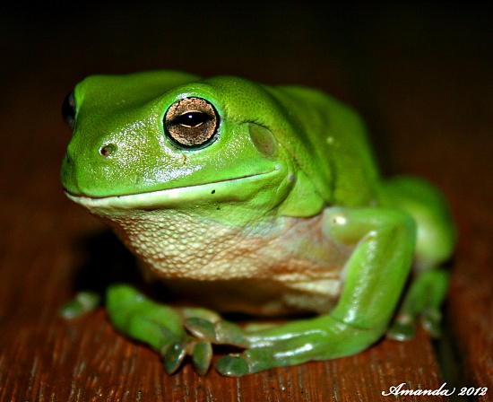 Floyd the frog on 365 Project