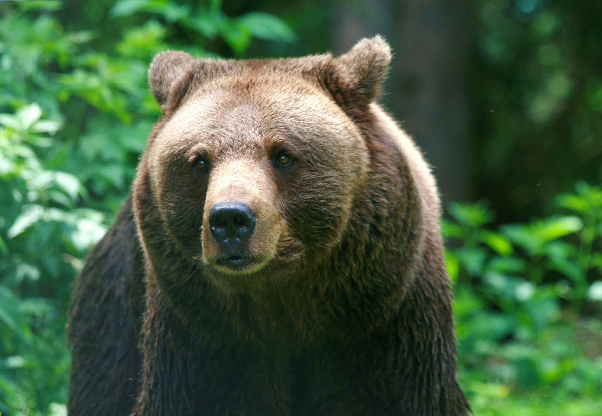 10 Facts About Brown Bears