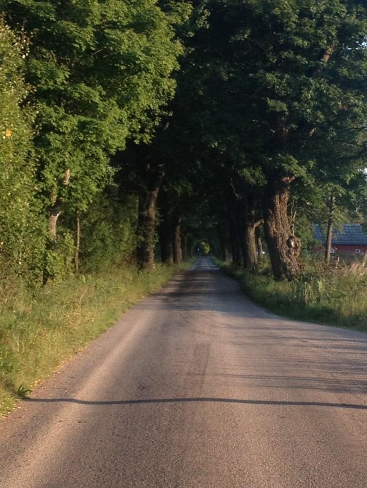 Den här bilden får väl illustrera dubbelheten mellan samhälle och natur. En asfalterad väg i en underbar allè. Landskapet runt om var för övrigt fantastiskt vackert.