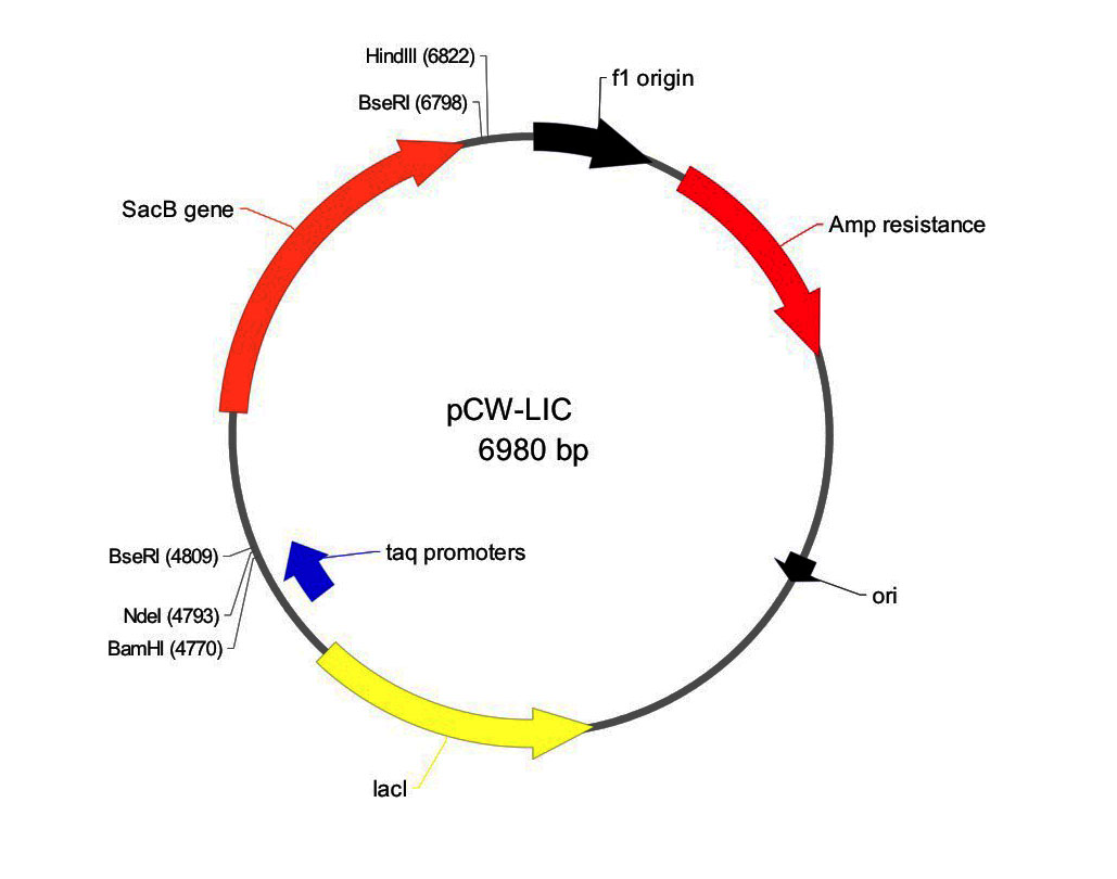 Addgene Pcw Lic
