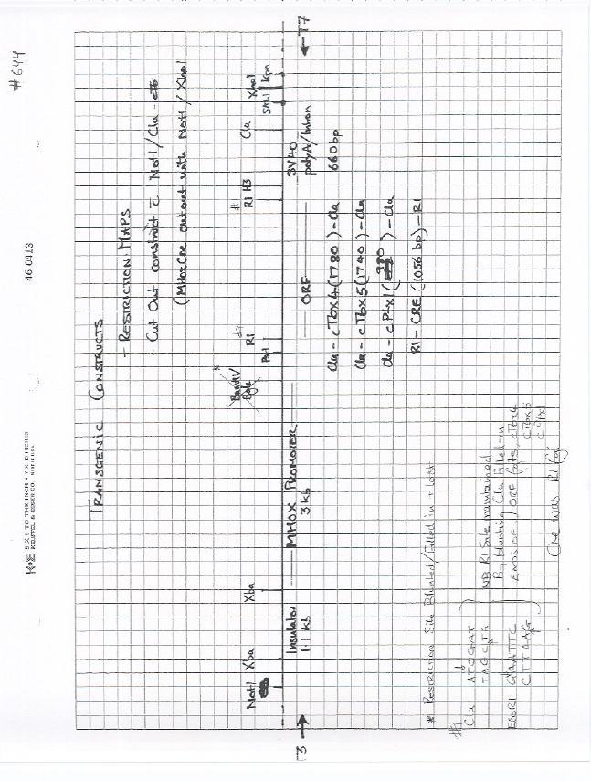 Addgene: pBS mPrx1 Cre (CT#644)