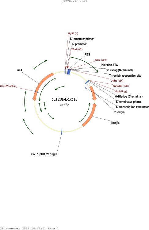Addgene: pET28a-Ec.coaE (pESC124)