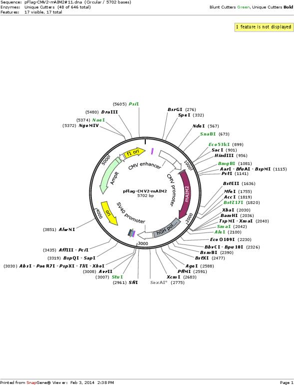 Addgene: pFlag-CMV2-mAIM2