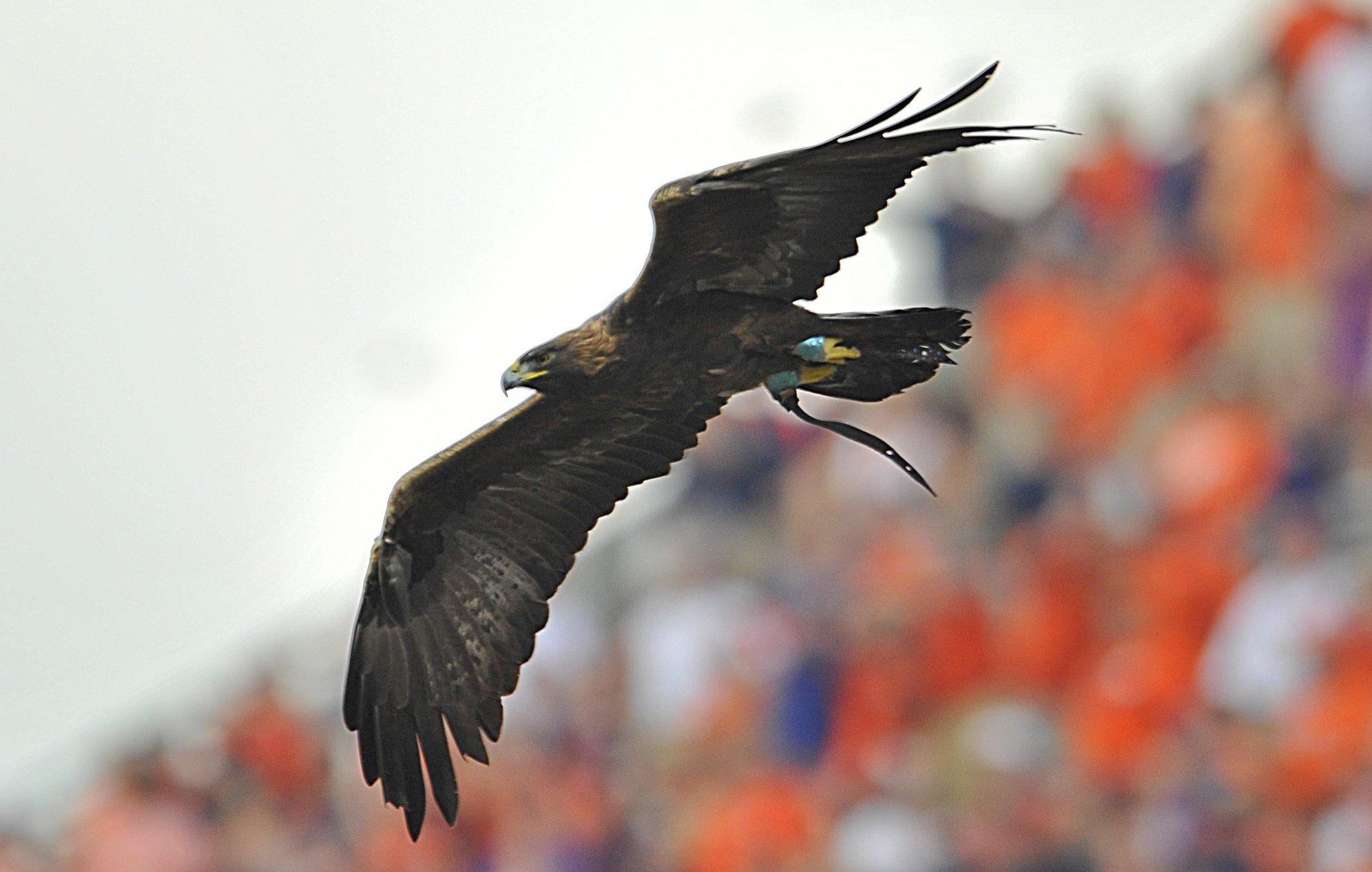 Auburn's Eagle Flyig