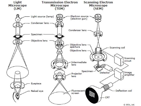 Microscopy for Materials Characterization: Illuminating