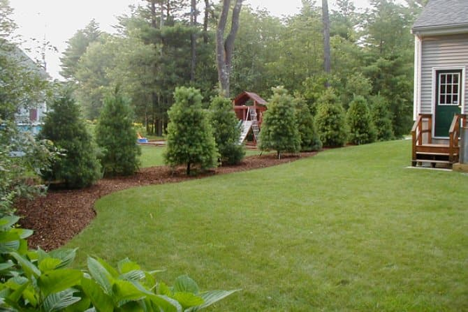 evergreen trees property