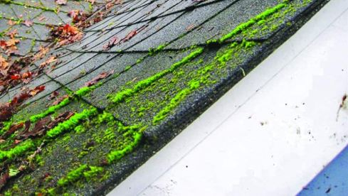 roof-clean-experts-tacoma-WA