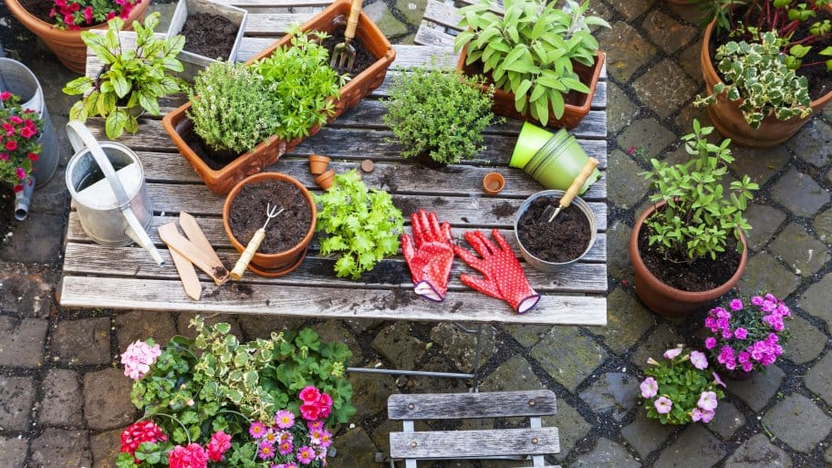 beginning home gardening guide