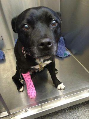 Molly recovering in vet hospital.