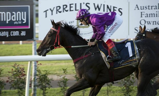 Jumbo Prince is one of a host of Toowoomba trained horses being aimed at next January's $10 million Magic Millions race day at the Gold Coast.