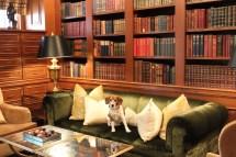Luxury Pet-friendly Accommodation World