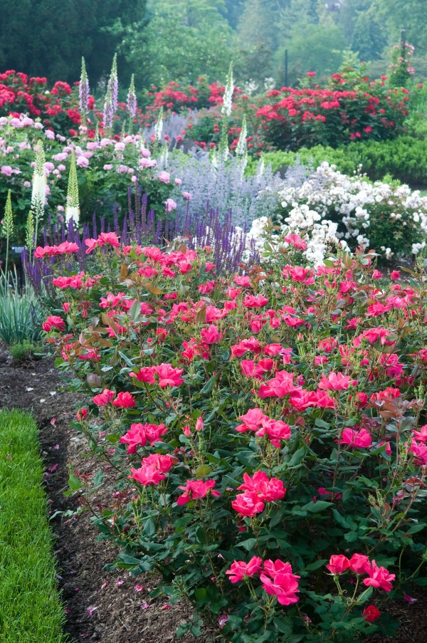 plant beautiful garden borders
