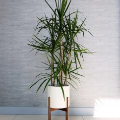 Living Room Tree Decorating Corners The Best Indoor Trees And Big Plants To Grow In Your