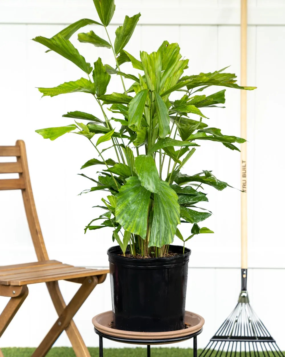 17 Best Indoor Trees And Tropical Plants To Grow In Your House Architectural Digest