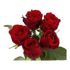 bouquet 5 roses rouges 50cm pas cher a
