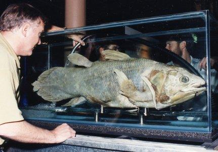 Coelacanth on display