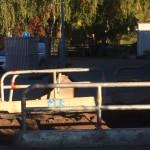 grävskopa hål fordonsjakt förskola yngre barn