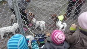 veterinärpraktik förskola grannar