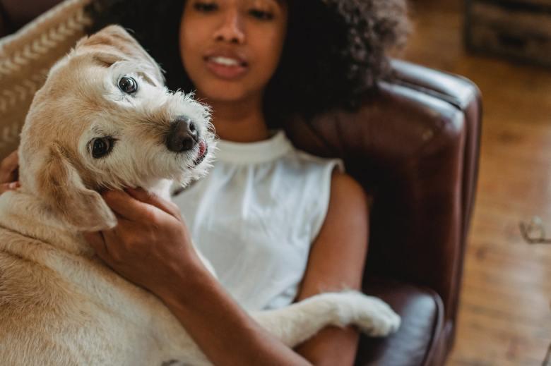 försäkring för hunden