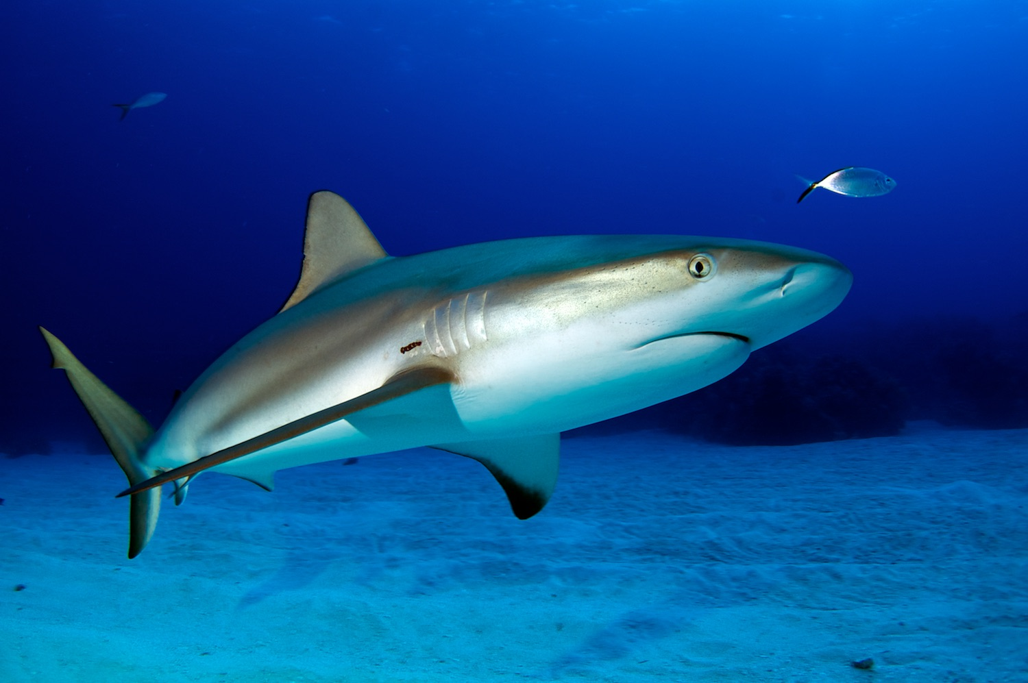 8 Facts You Didn T Know About Sharks