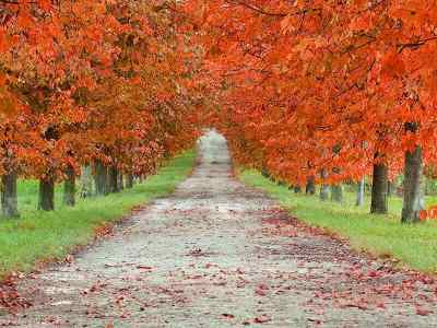 Maple Leaf Wallpaper For Fall Season The Most Beautiful Places To Travel This Fall Autumn