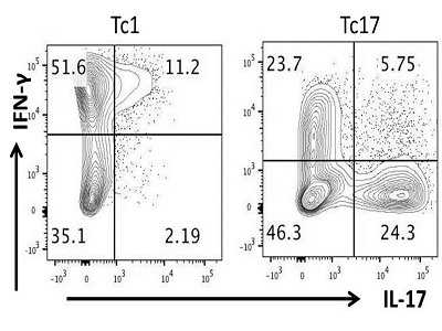 Intracellular Staining for IL-17 by Flow Cytometry
