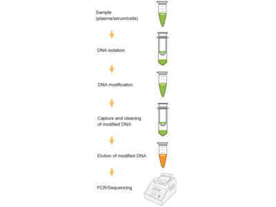 DNA Purification Kits for Epigenetics Research