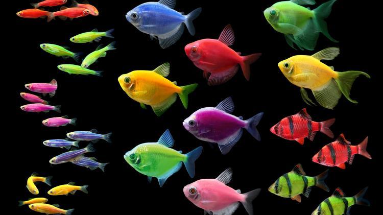 glofish has sold the