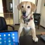 Miami law firm on the benefits of Take Your Dog to Work Day