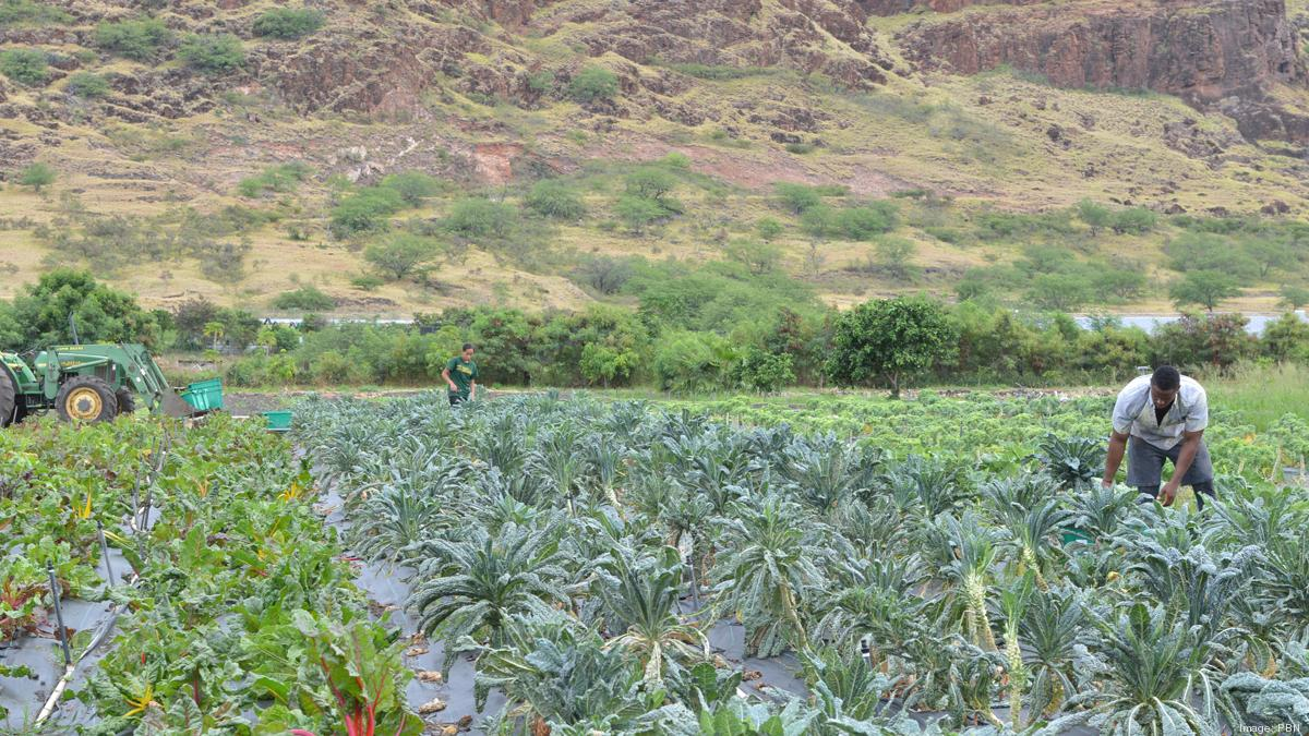 How Hawaii farmers food entrepreneurs can secure capital ...