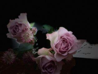 15 januari - jag är född på Laura-dagen och får vackra rosor, av Ewa.
