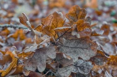 Även eken står kal i skogen - Margareta
