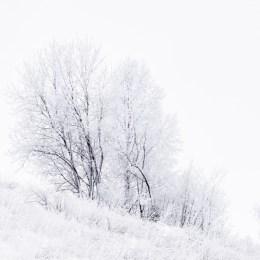344 - Vinterträd - Margareta