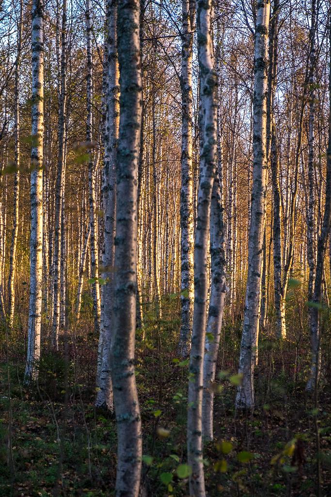 """""""Ser inte skogen för alla träd"""". Maritha"""