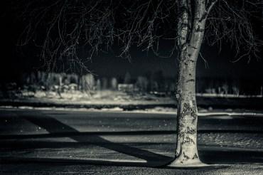 Gränsträd, ... - av Margareta