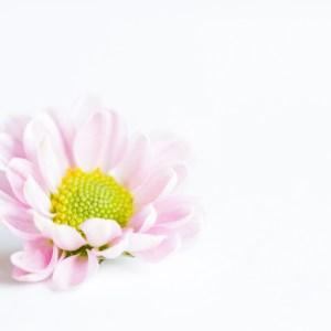 Blomman som lämnade buketten av Malin