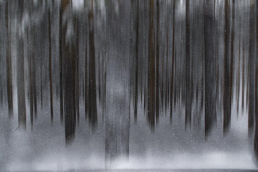 Linjerat i fokus - av Margareta