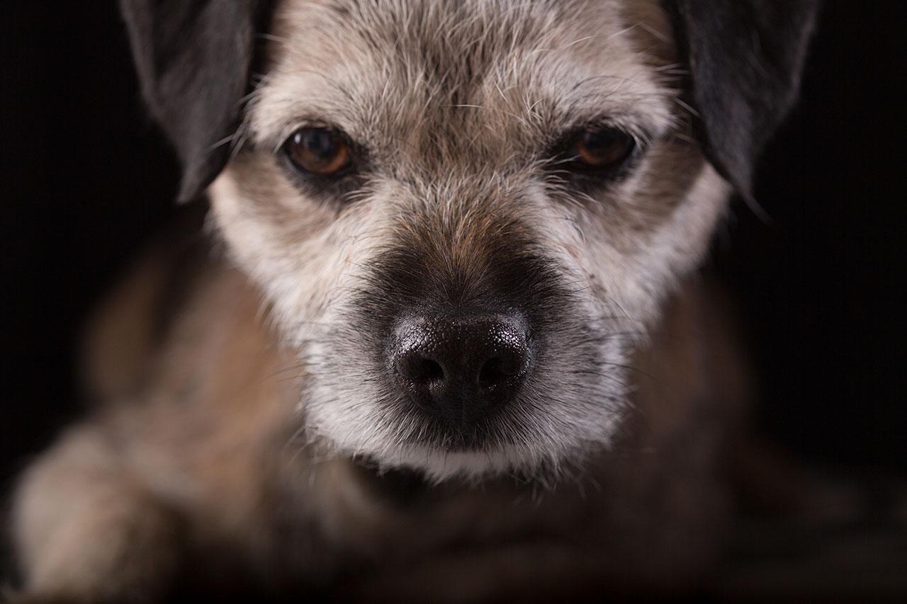 Hundporträtt II - av Eva