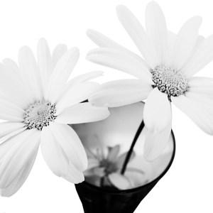 12 september 2018 - i vasen -Margareta