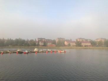 Dag 4 Njuter av cykelturen till jobbet, det är vackert när solen bryter igenom dimman. av Malin