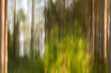 Skogens ljus -av Margareta