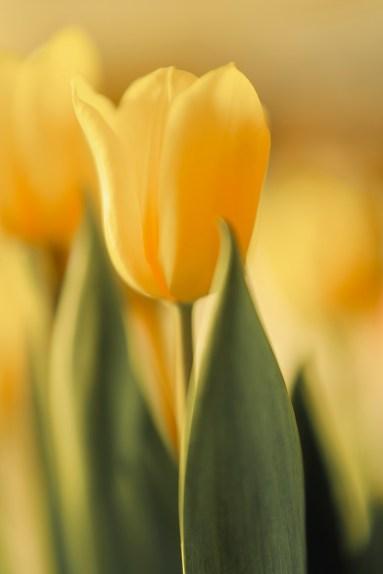 73 -association genom färg -av Margareta Gult -solsken, optimism, upplysning, lycka,