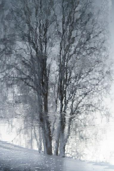 87 Träd -av Margareta