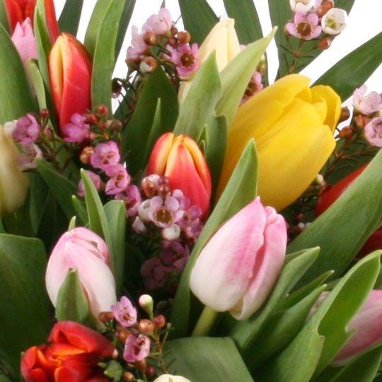 30 Bunte Tulpen  Tulpenversand Blumenfee  Tulpen frisch