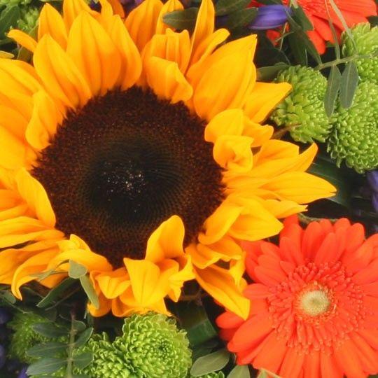 Blumenstrau Sommer Sonnengold online verschicken mit Blumenfee  dem Blumenversand