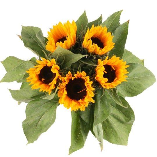 Sonnenblumen im Bund  Sonnenblumen online deutschlandweit