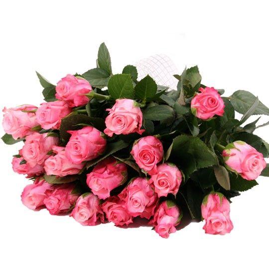Rosa Rosen im Bund  Rosen online deutschlandweit