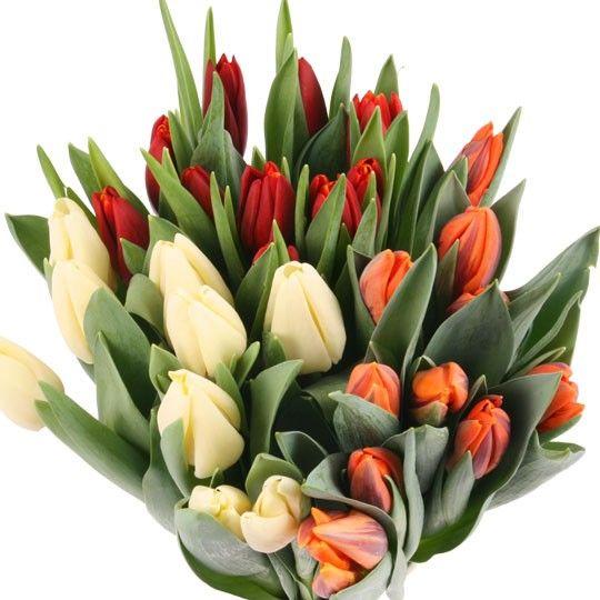 Tulpen im Bund  Tulpen online versenden mit blumenfeede