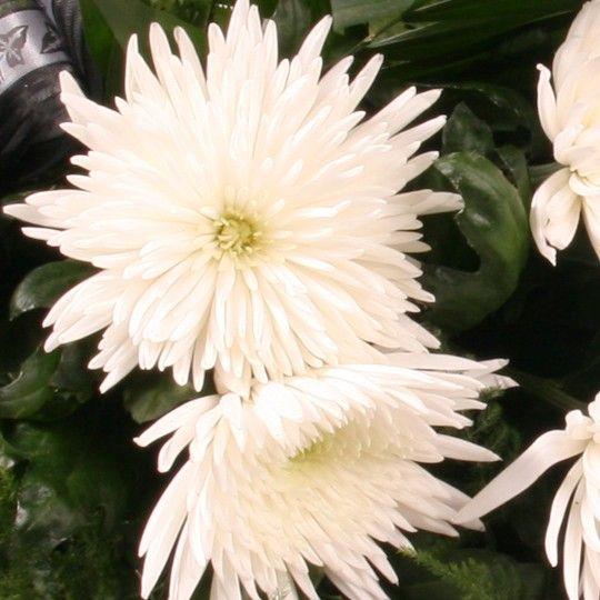 Trauerstrau Stille Trauer  Blumen online verschicken